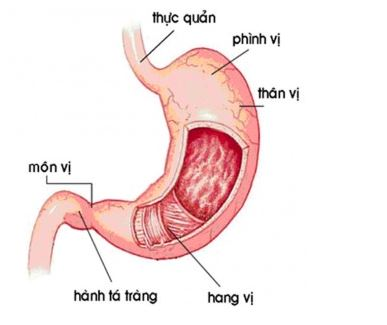benh-viem-hang-vi-da-day-co-nguy-hiem-khong