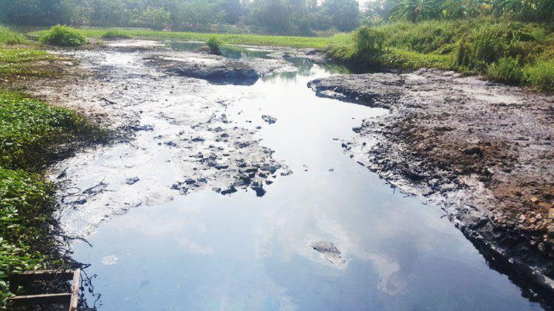 Không dùng nước sông bởi chứa vi khuẩn Hp